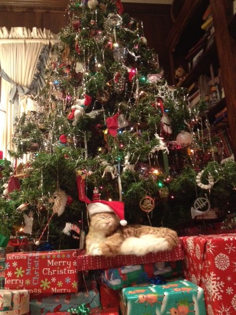 Stuffy under the tree